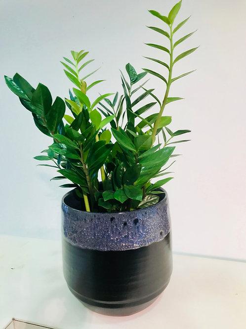 Groene plant in artistieke pot