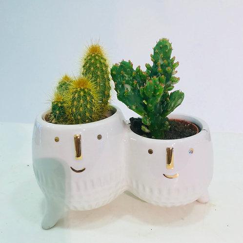 Originele combinatie cactus