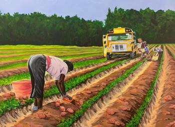 Sweet Potato Harvest 2020
