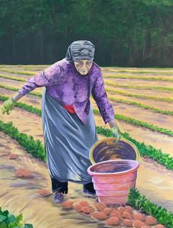 Sweet Potato Lady