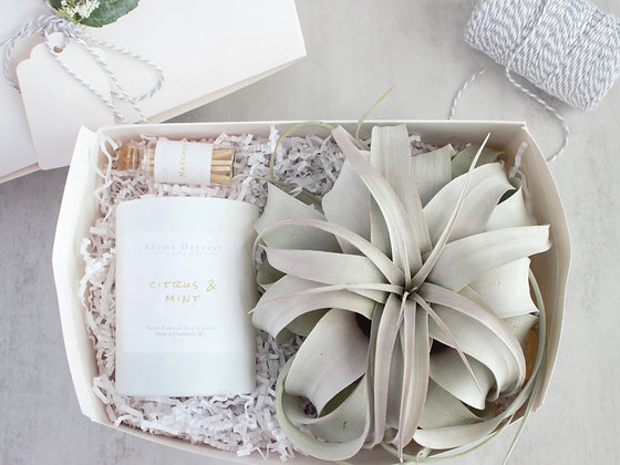 Xerographica Air Plant & Soy Candle- Gift Set