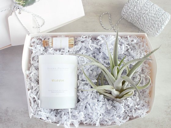 Large Air Plant & Soy Candle Gift Box Set