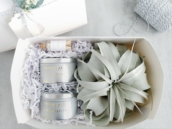 Candle Tins & Xerographica Air Plant Gift Set