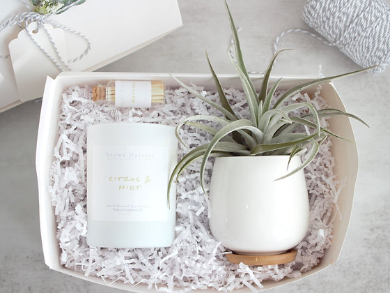 Candle & Large Air Plant w/Holder Gift Set Box