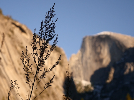 Field Notes: Shooting in Yosemite