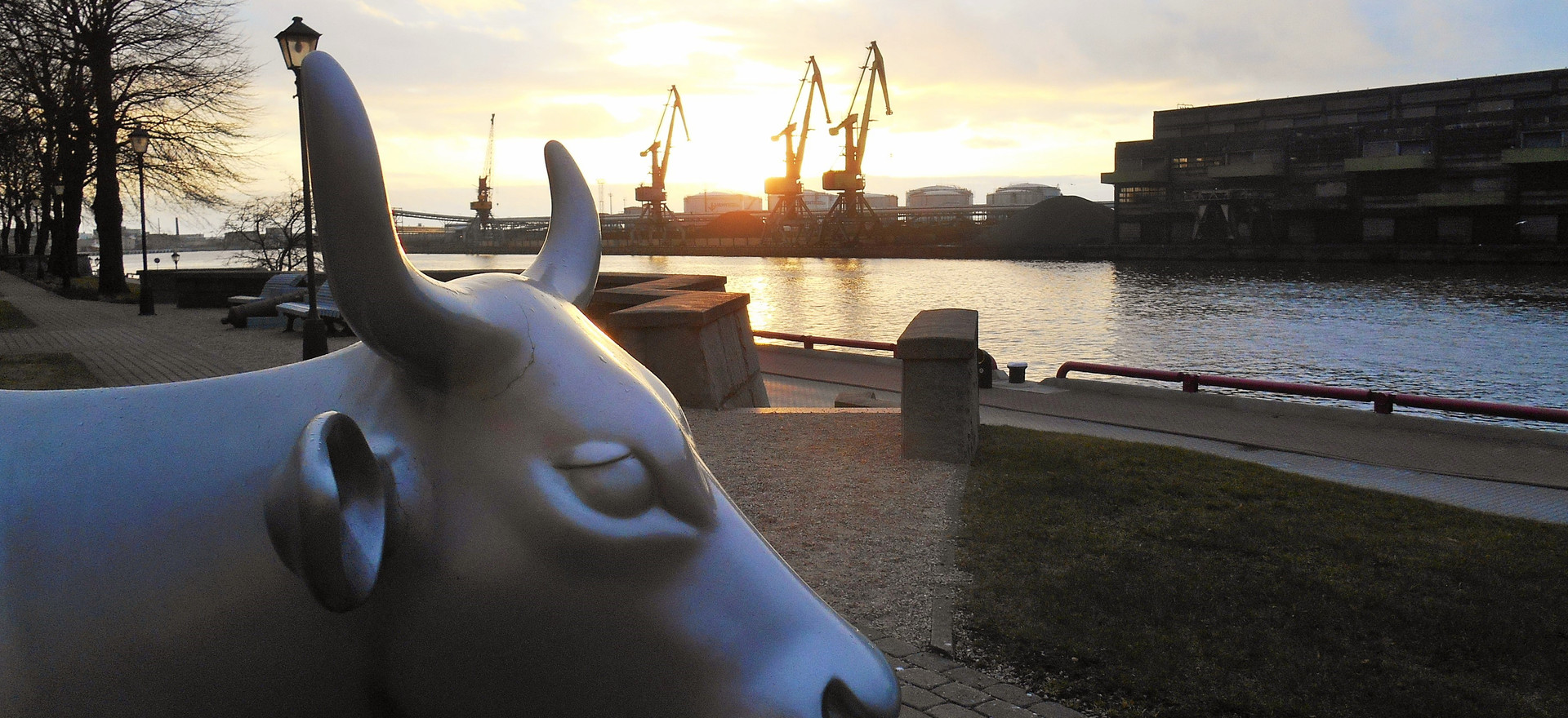 Cow's keeping the silence at sunset, Ventspils, April 2017