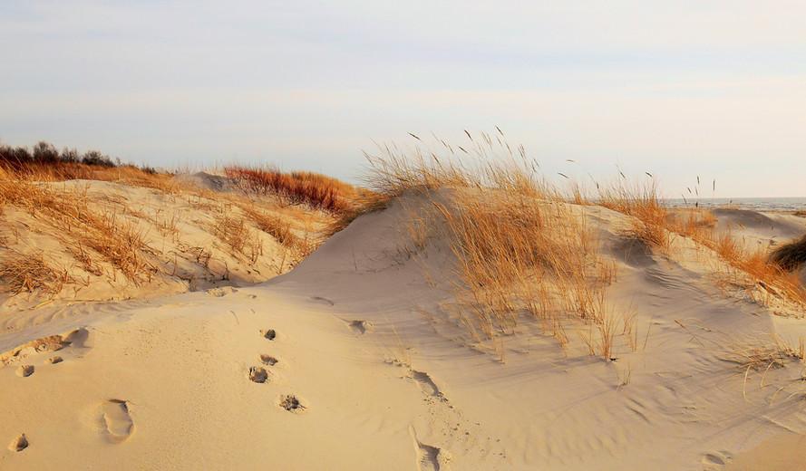 Camel shore breathing, Liepaja, March 2017