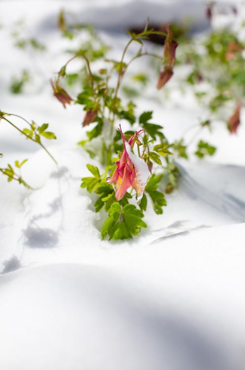 Spring Snow-3.jpg