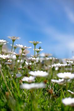 Colorado wildflowers.jpg