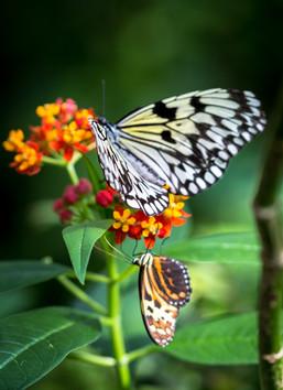 Butterfly Pavillion.jpg