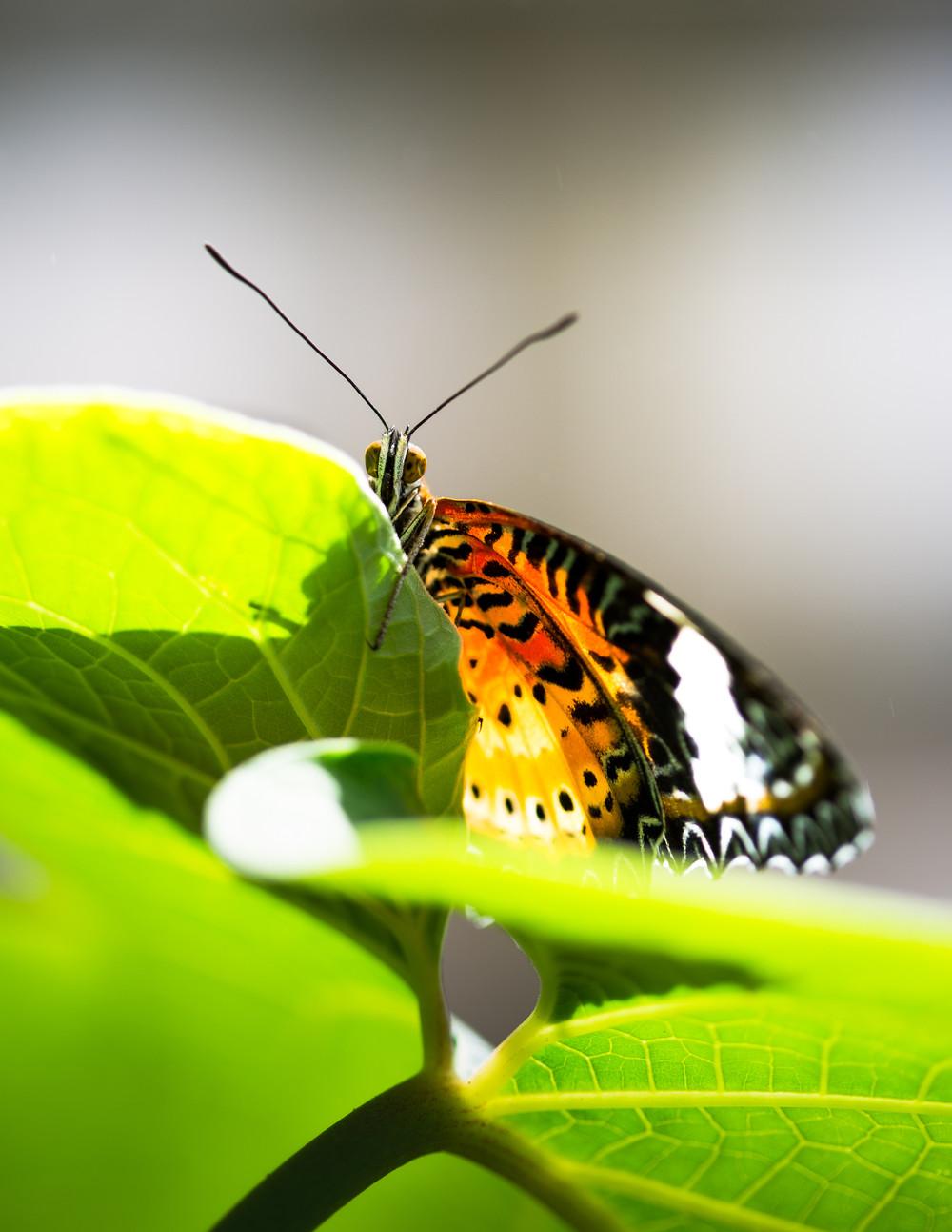 Butterfly Pavillion-2.jpg