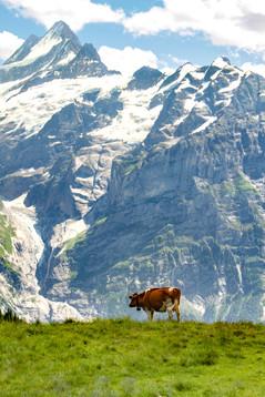Switzerland 2013-2.jpg