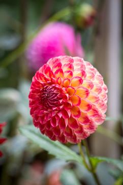 Seattle Flowerss-2.jpg