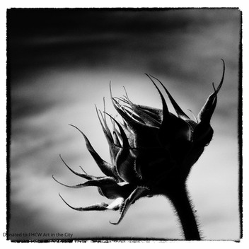Richard Paul Hoyer, Sunflower