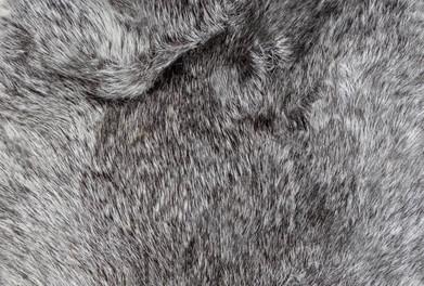 fur 1-_edited.jpg