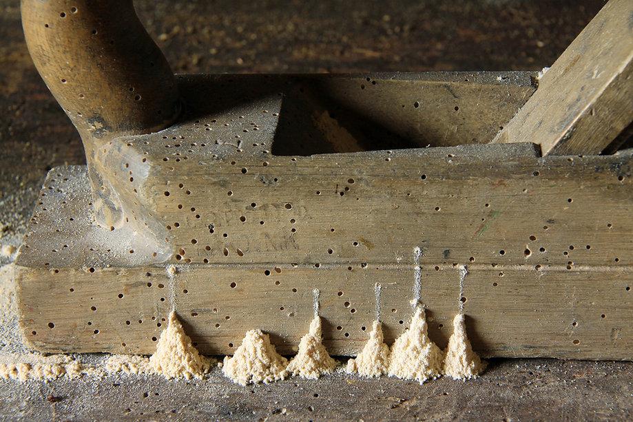 22544aad-wood-worms.jpg