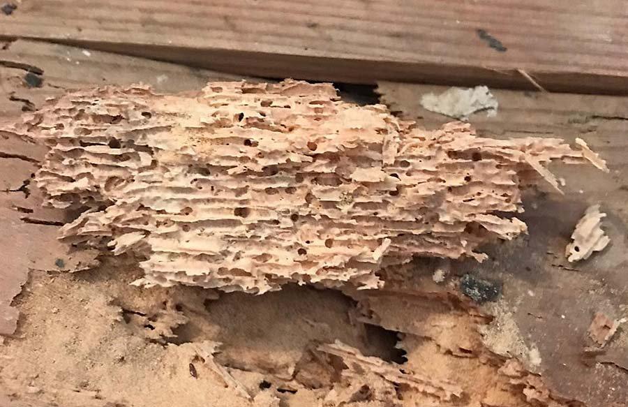 woodworm-treatments-warwickshire.jpg