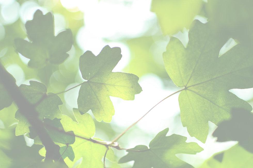 green%20leaves%20at%20daytime_edited.jpg
