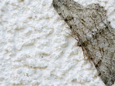 Mottenbekämpfung in Dorsten