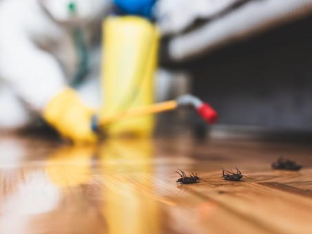 Zuverlässiger Kammerjäger für eine Schädlingsbekämpfung in Aachen gesucht?