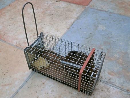 Schädlingsbekämpfung Aachen - Mäuse im Haus?