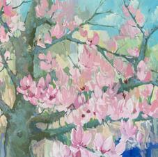 Spring. Japanese Magnolia