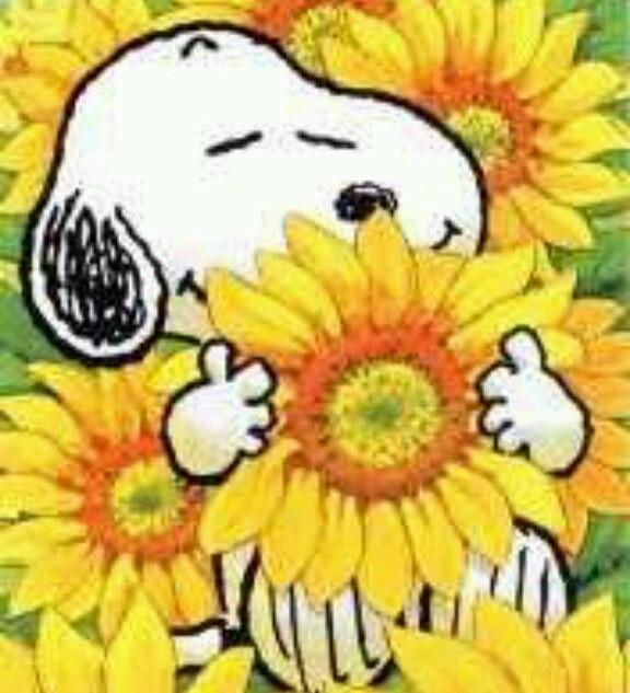 Shikui Song - Sunflower