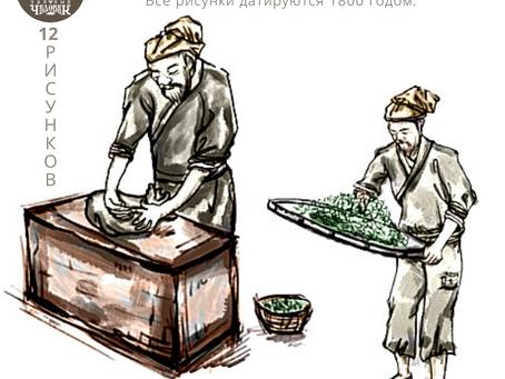 12 Рисунков о производстве чая в Китае 19 век!