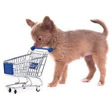 Chihuahua Einkauf