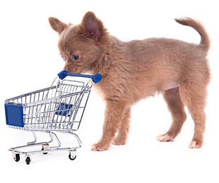 Tips for choosing a puppy