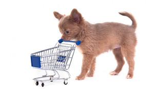 PLACING THE CART BEFORE THE HORSE. HAVING YOUR MONEY IN PLACE BEFORE THE DEAL COMES