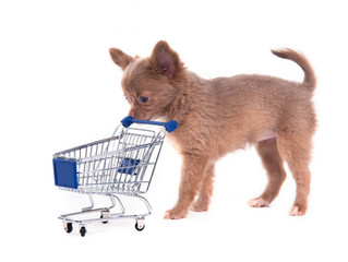 Where To Shop With Your Dog