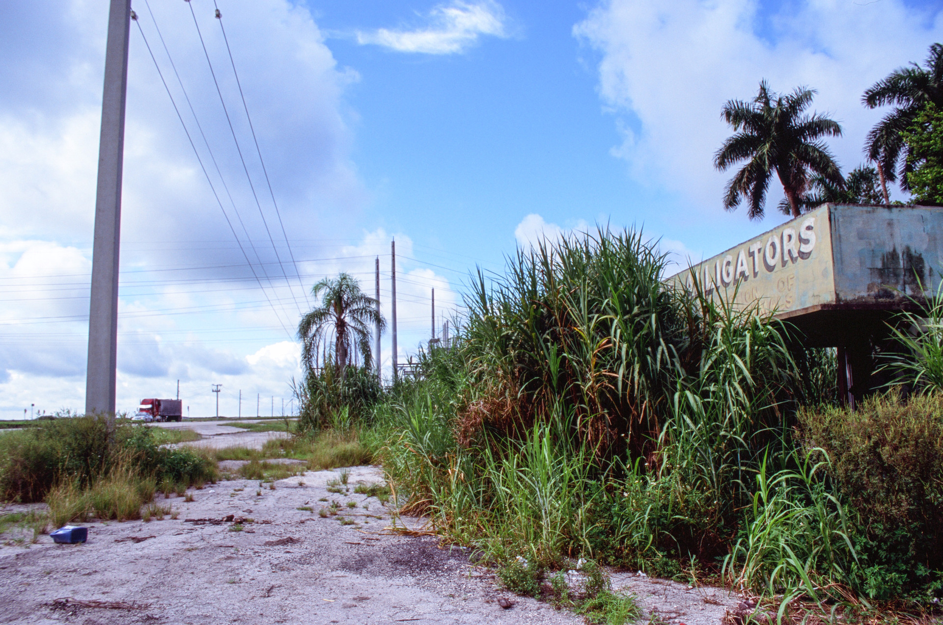 Gator Land | South Bay, FL