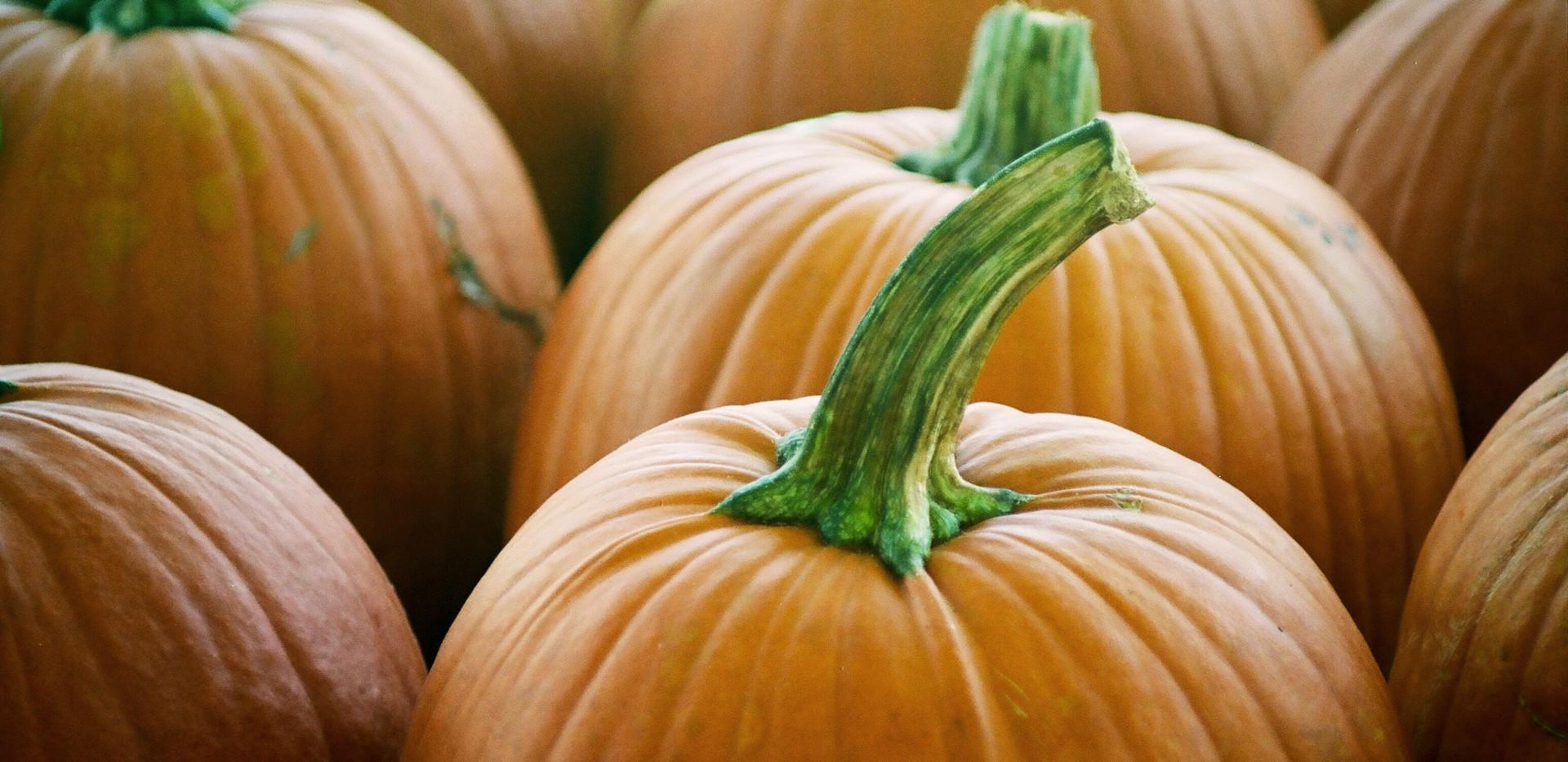 Pumpkins A-Plenty