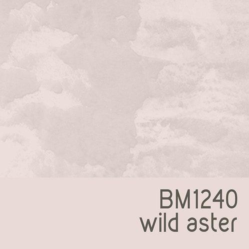 BM1240 Wild Aster