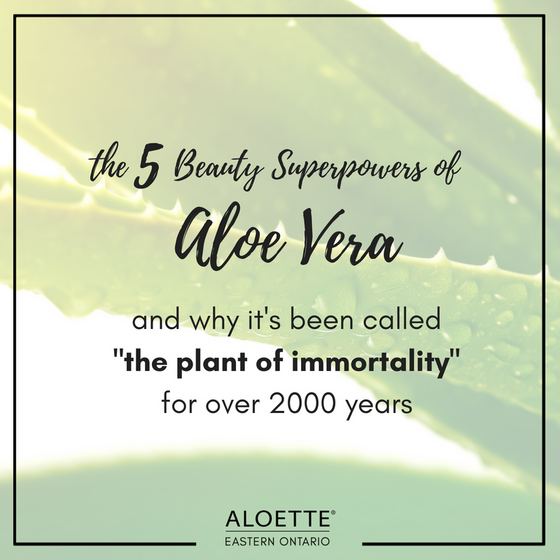 The 5 Beauty Superpowers of Aloe Vera