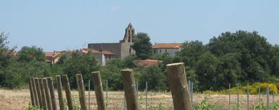 The church seen from the nearest vineyard