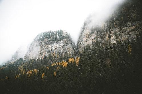 Walliser Wald