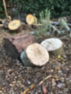 forestry area.jpg