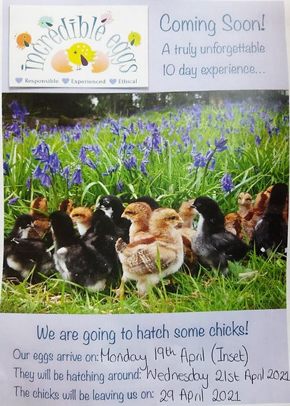 Chicks%20Poster_edited.jpg