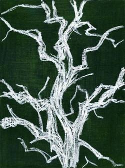 White Tree, Kruger, SA