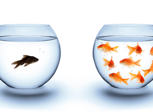Will I be a Small Fish in the big Amazon Pond?