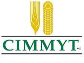 International Maize and Wheat Improvement Centre (CIMMYT)