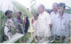 Photo-18 Maize field visit