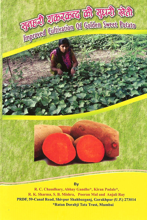 Improved Cultivation of Golden Sweet Potato