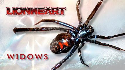 Widows Cover.jpeg