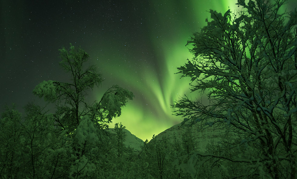 photo:aurora & the forest