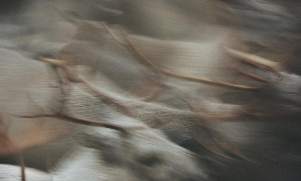photo:reindeers