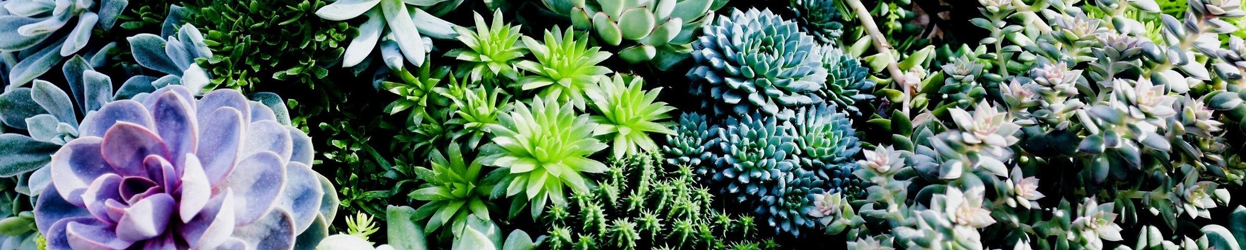 Cactus, Phoenix, AZ