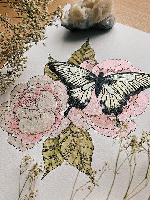 Papillon Pivoine